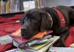 Канистерапия в библиотеке – собаки откроют детям чудесный мир книг
